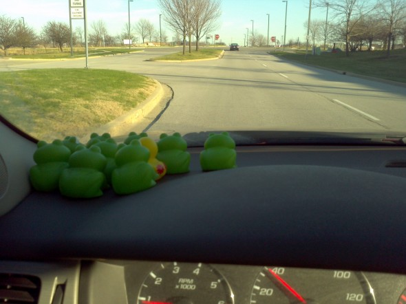 9 frogs and duck on dashboard of car